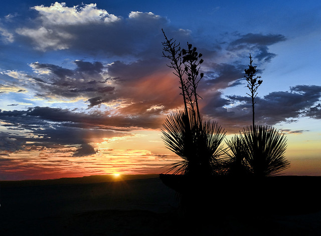 Another Yucca Sunrise