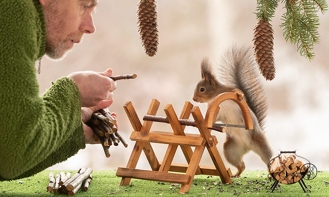 Red Squirrel and man are standing with a saw and saw block