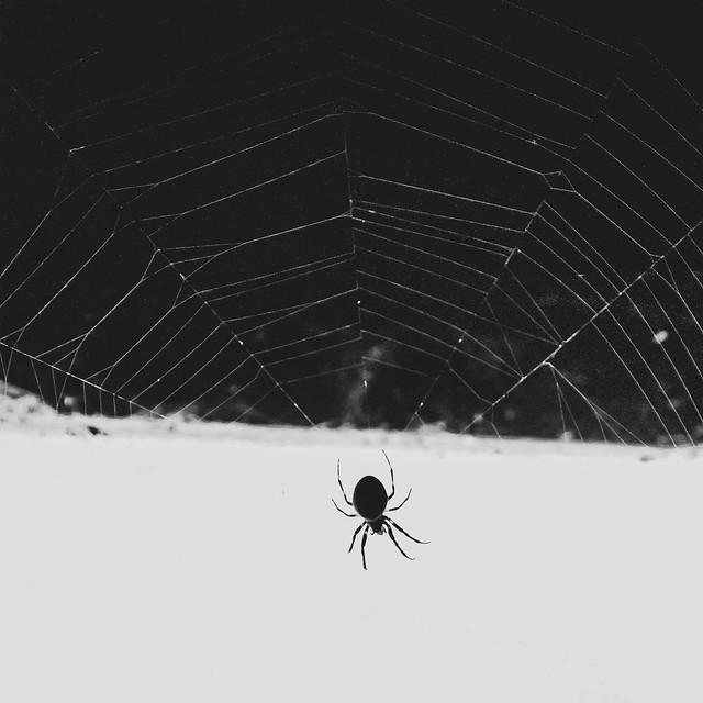 Spider BWSq