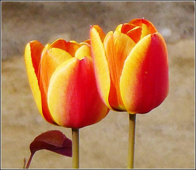 Floral Composition .