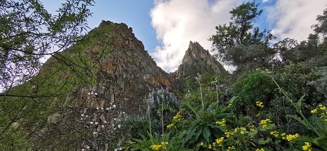 Senderismo Barranco la Pasadera Reserva Natural Especial de los Marteles abril 2021 Gran Canaria  09