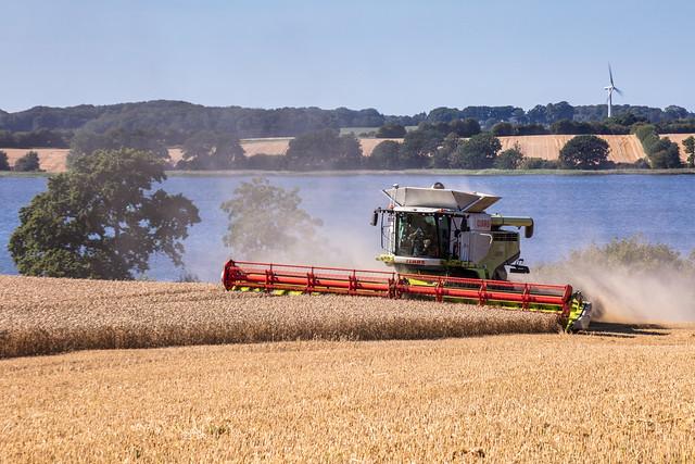last wheat fields