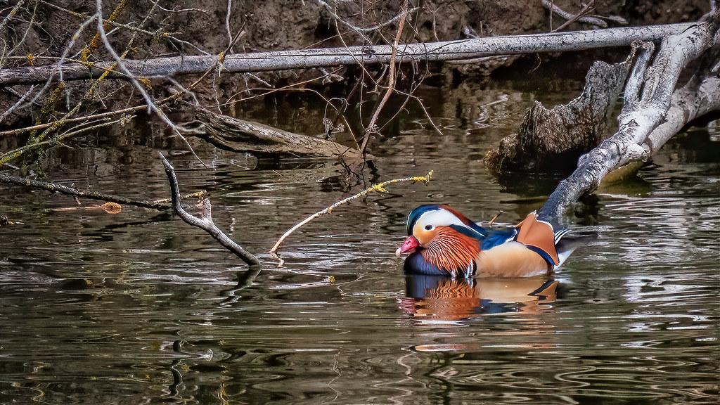 Tempête et sérénité sur l'étang... 51107308198_aa7956c15f_b