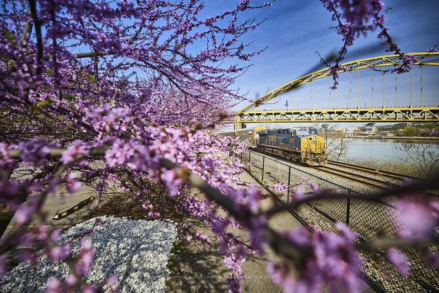 Spring and Pittsburgh : Spring Steel