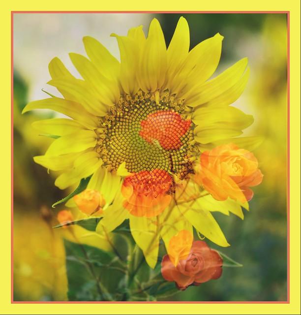 Una rosa nunca podrá ser un girasol, y un girasol nunca podrá ser una rosa. Todas las flores son hermosas en su propia manera, y así también lo son las mujeres.