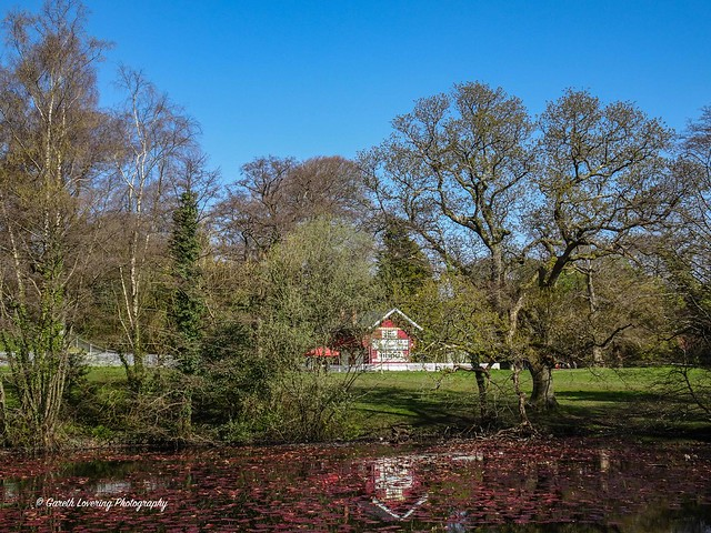 Swansea Singleton Park 2021 04 10 #2