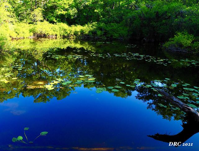 Pop Ash Pond at Six Mile Cypress Preserve