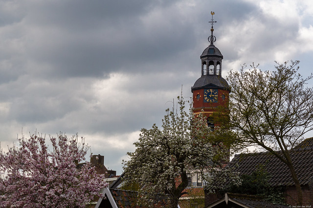 Church tower surrounded by blossoming trees in the spring