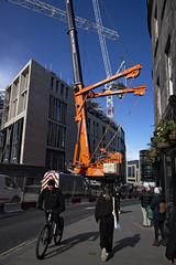 crane watching