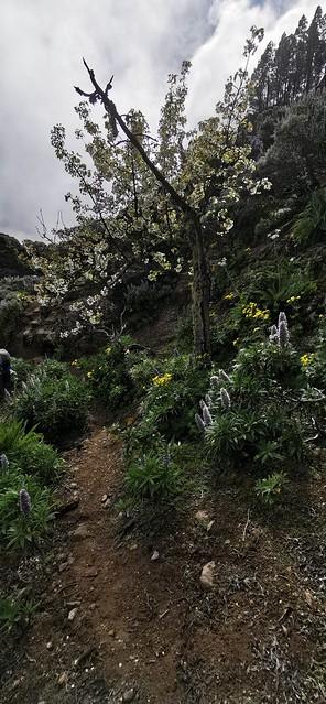 Senderismo Barranco la Pasadera Reserva Natural Especial de los Marteles abril 2021 Gran Canaria  19