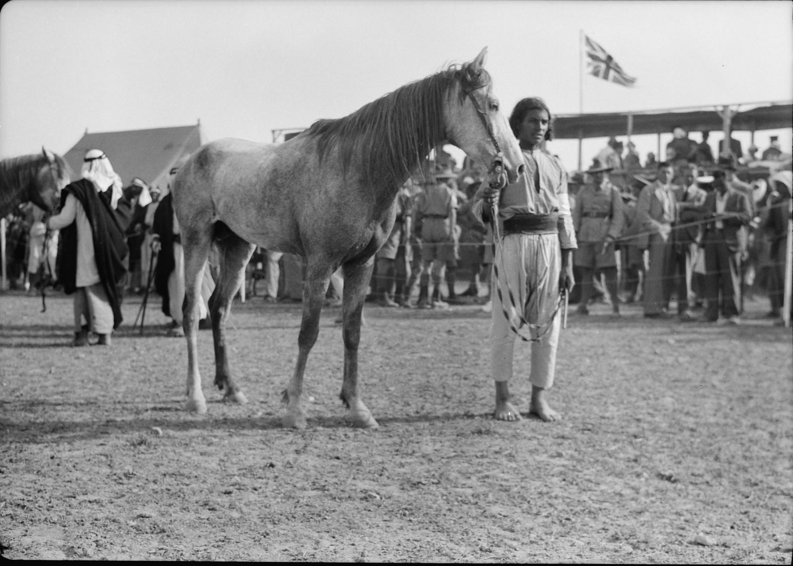 23. Парад лошадей перед скачками