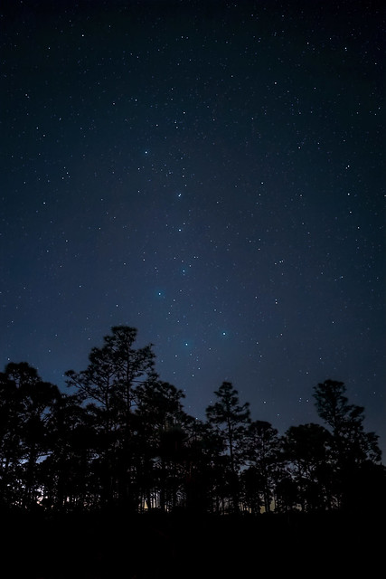 Photo of the night sky at 5 a.m with the Big Dipper low in the sky over a forest of slash pine trees at Babcock Wildlife Management Area near Punta Gorda, Florida
