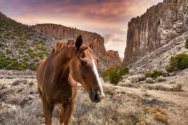 A Horse with No Name (version II)