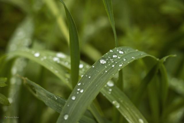 ...gocce di pioggia...