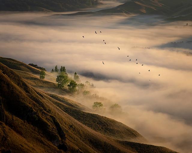 Trees, Birds and Fog