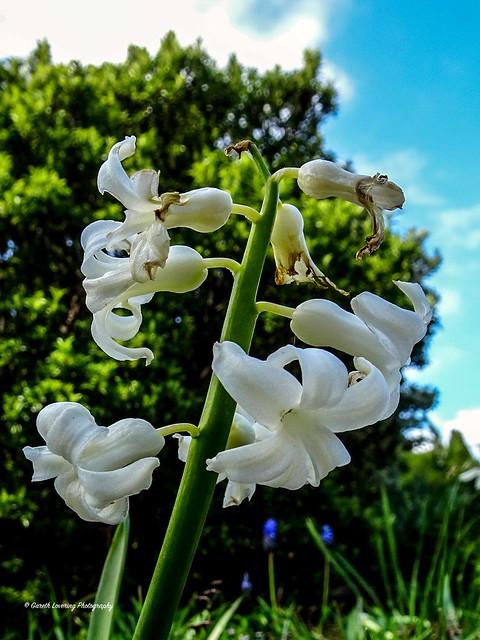 Flowers at Swansea Botanical Gardens 2021 04 10 #43