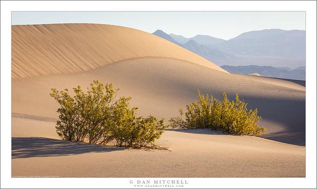 Creosote, Dunes, Desert Mountains