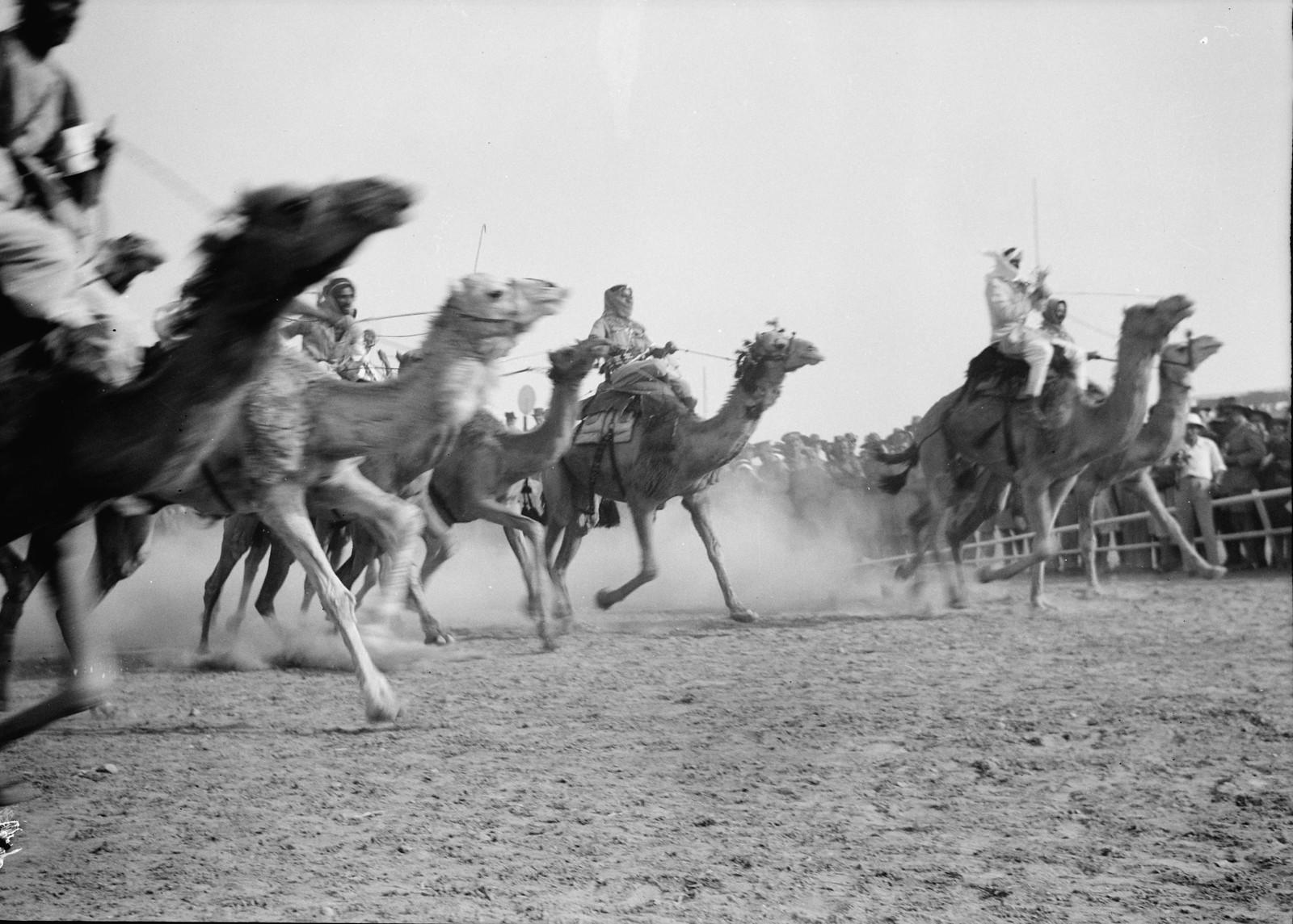 32. Гонка на верблюдах идёт полным ходом