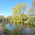 Willow scene at the canal