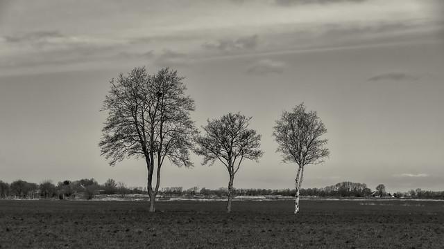 Three trees in East Frisia