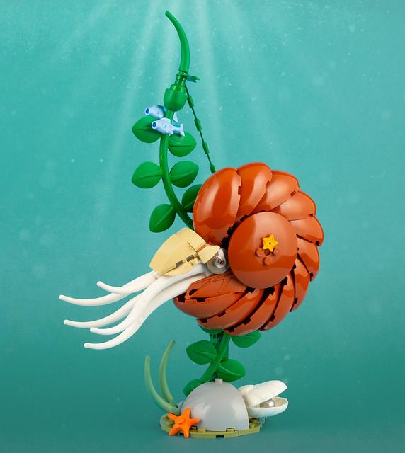 Nautilus   101 pieces