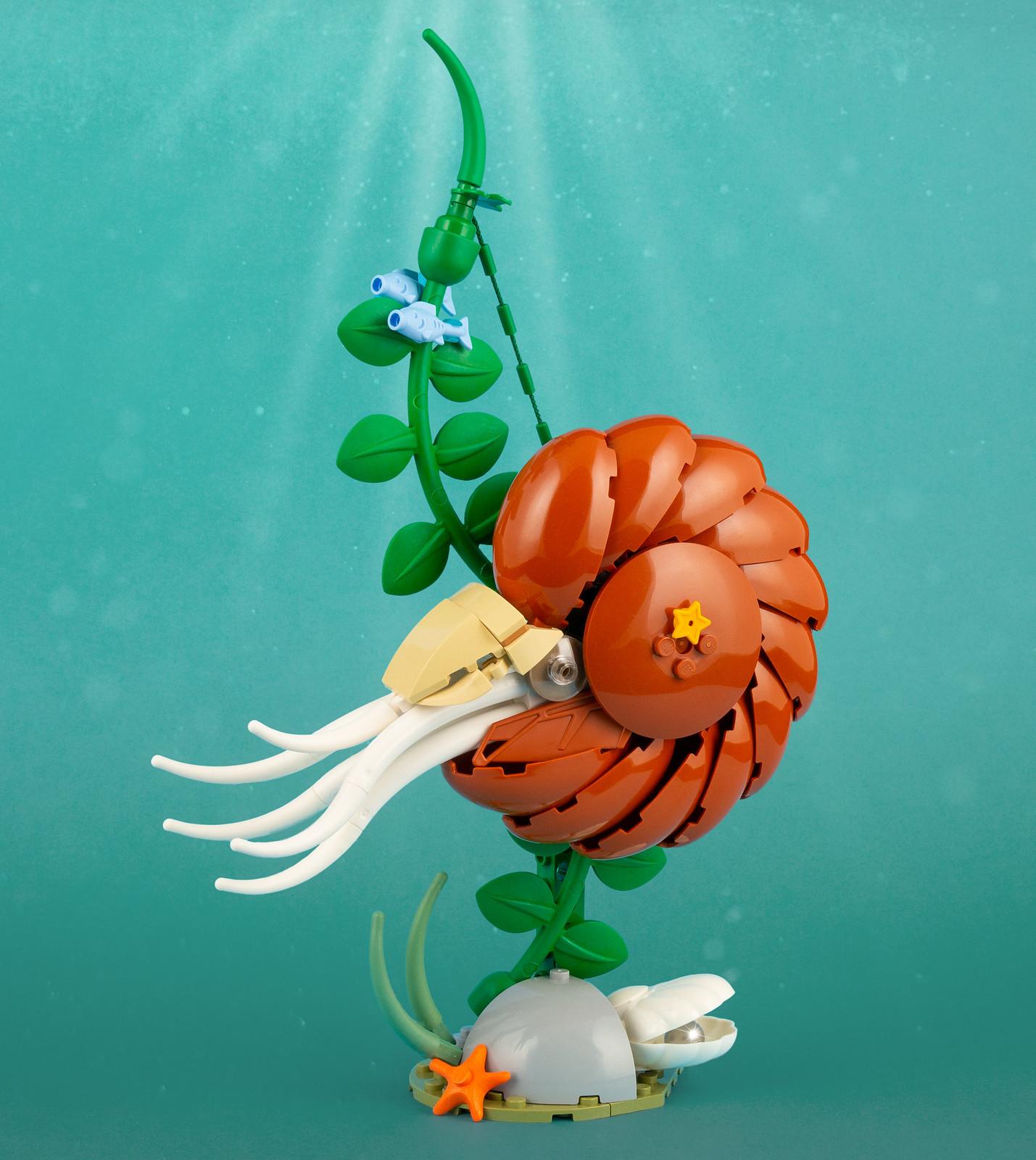 Nautilus | 101 pieces