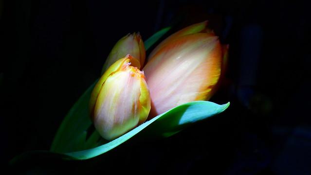 Drei Blüten - Three Flowers