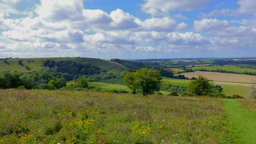 england hampshire uk oldwinchesterhill nationalnaturereserve nnr chalkdownland southdownsnationalpark green