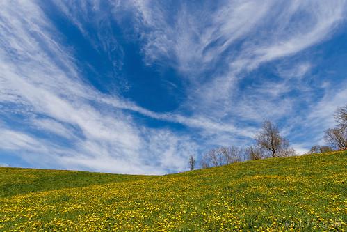 Spring field [explored]