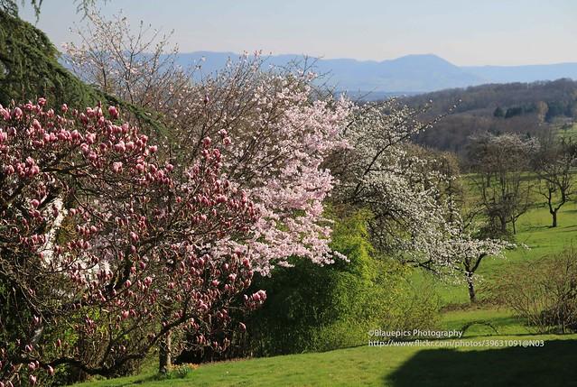 Hohengehren, Brühl, Spring