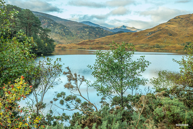 Archetypal Scotland. Mountains, glen, loch, island, Scots Pine, Birch, Wild Rosehips, Gorse and Golden Moors in autumn. Loch a Mhuillidh and Strathfarrar in all its glory.
