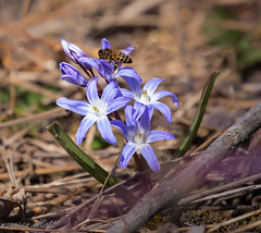 Bzzzz... Spring Has Sprung