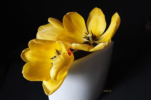 Une lucarne y recueillait comme de l'eau la clarté toute pure de la nuit, et l'épandait sur un coffre de tulipes peintes. Claude MauriacLe Temps immobile (1974-1988)