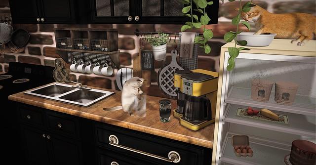 Coffee & Cats