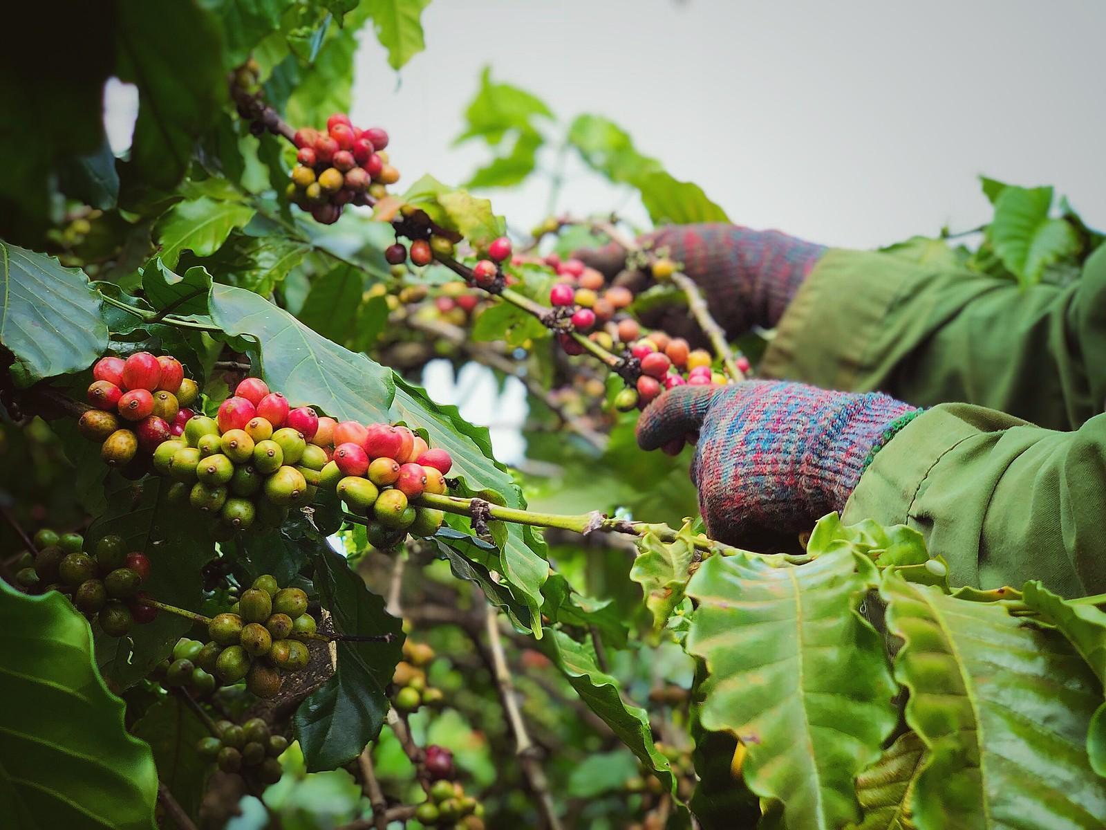 Viet Nam Coffee 5