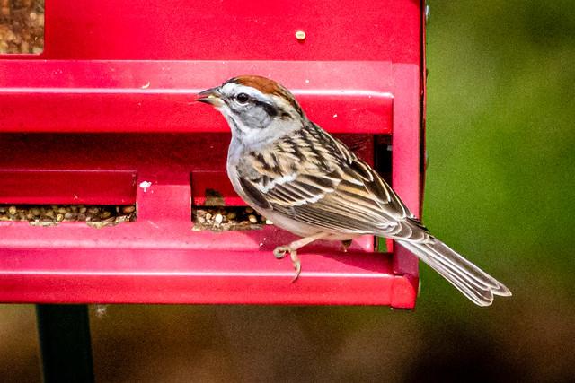 Birds 0410 -8445