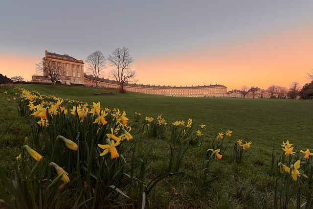 Spring daffodils at the Royal Cresent Bath at dusk... look 👀at that 🌟afterglow..