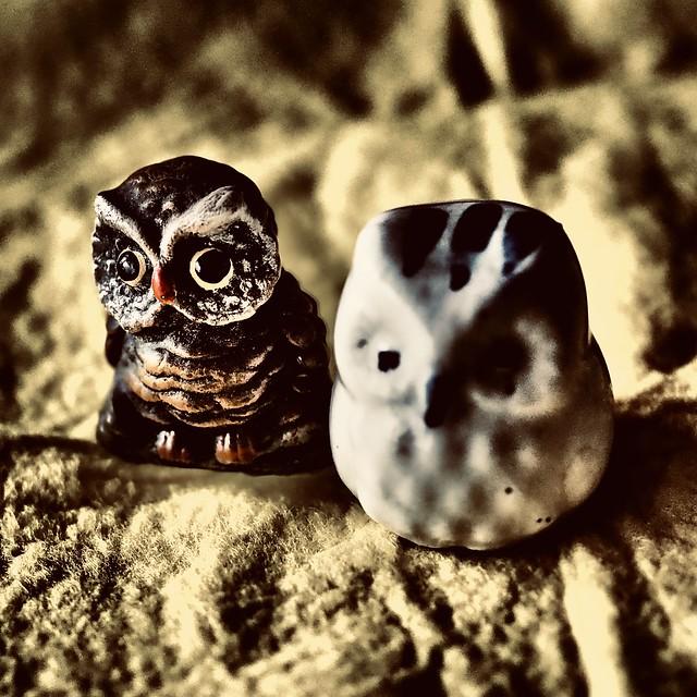 A pair of sad owls
