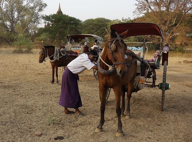 MYANMAR, Burma - Old-Bagan, mit der Pferdekutsche durch das weitläufige Ruinenfeld mit zahlreichen Tempeln und Sakralgebäuden der  historischen Stätten... with the horse-drawn carriage through the extensive field of ruins   ... 78287/13567