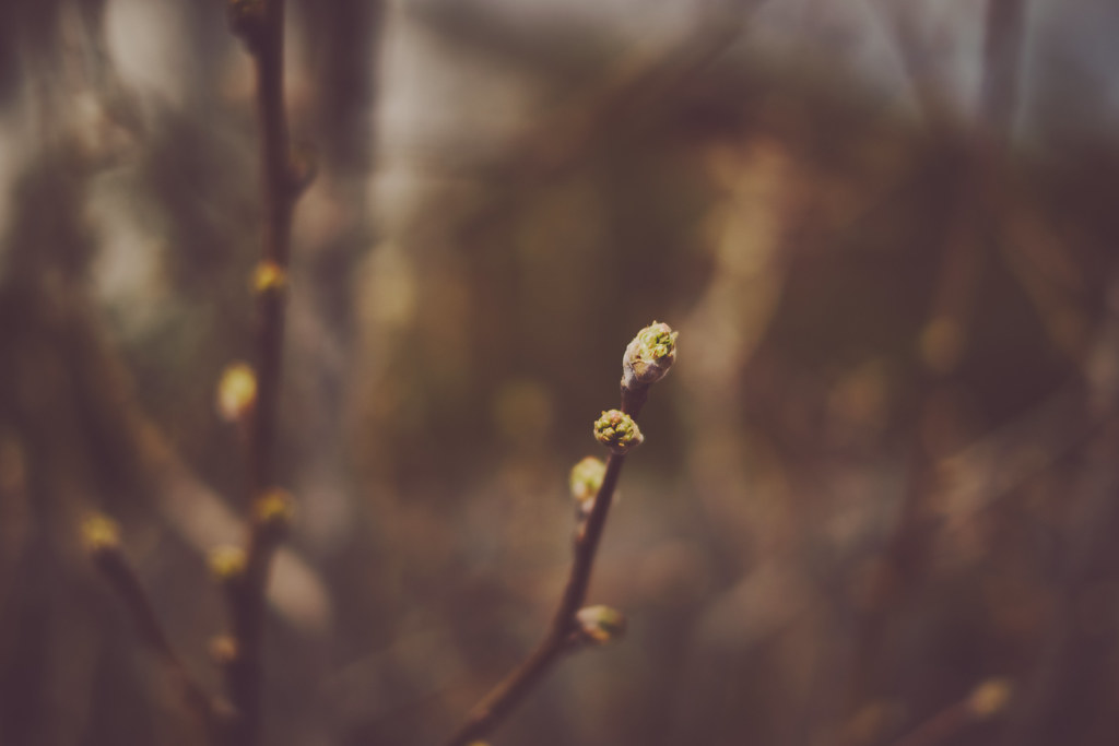 101/365 : Signs of life