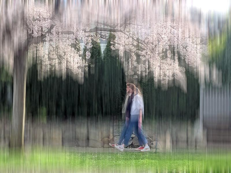 Sakura series .. synchronicity