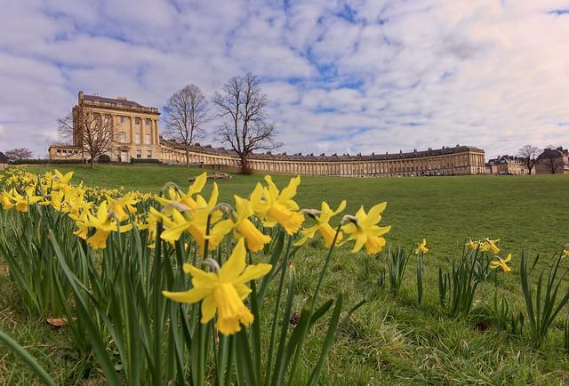 Spring daffodils at the Royal Cresent Bath.. ❤️