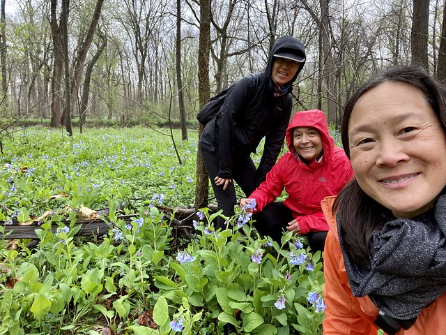 Spring Flower Hunting