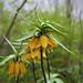 "<p><a href=""https://www.flickr.com/people/190173716@N05/"">kovalevdmitriy87</a> posted a photo:</p>  <p><a href=""https://www.flickr.com/photos/190173716@N05/51110022045/"" title=""Spring in Berlin""><img src=""https://live.staticflickr.com/65535/51110022045_dc1afe6d0d_m.jpg"" width=""240"" height=""160"" alt=""Spring in Berlin"" /></a></p>"