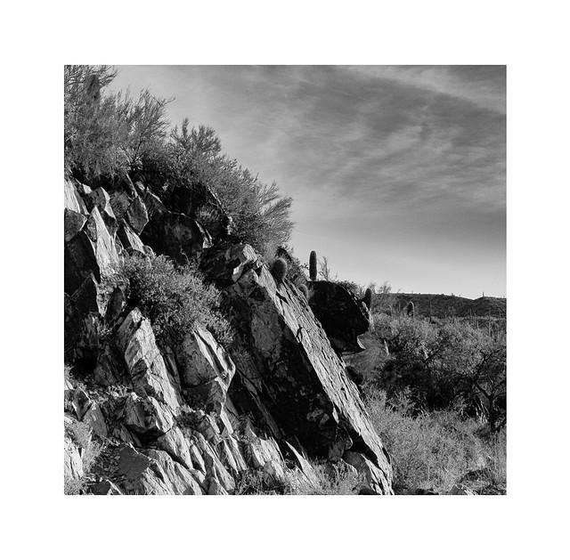 Sonoran Desert rock detail