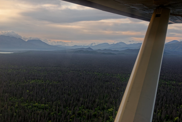 Looking Across a Forest of Trees to Distant Mountains of Katmai National Park