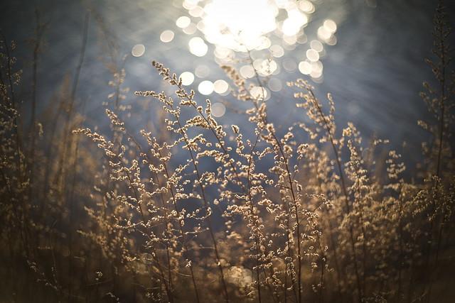 YAB: Stalks Of Grass