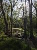Walk at Lick Creek
