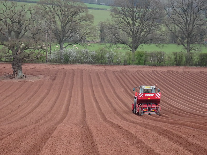 Planting Potatoes: Red Tractor + Red Soil = Herefordshire Field