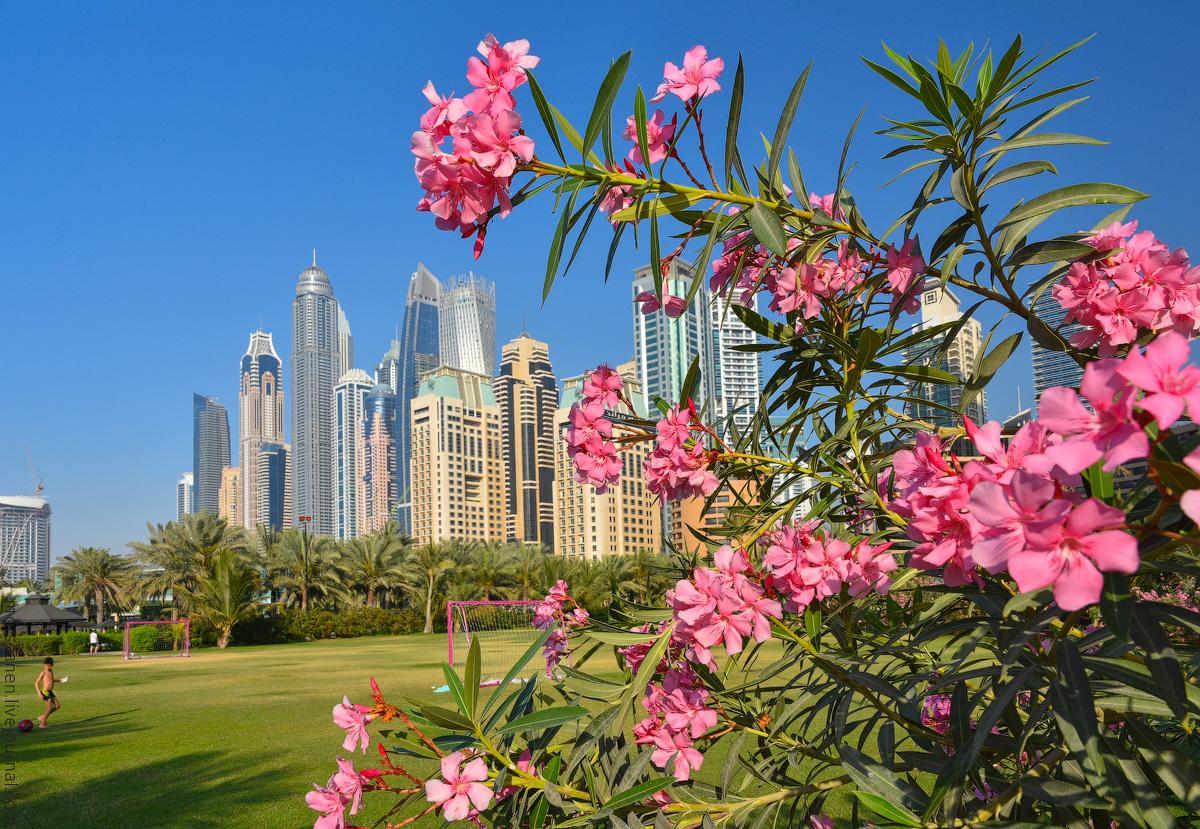Dubai-2021-(8)